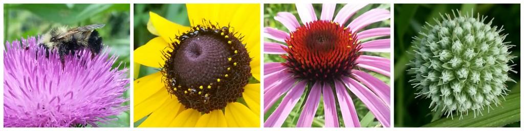 wildflower fascination